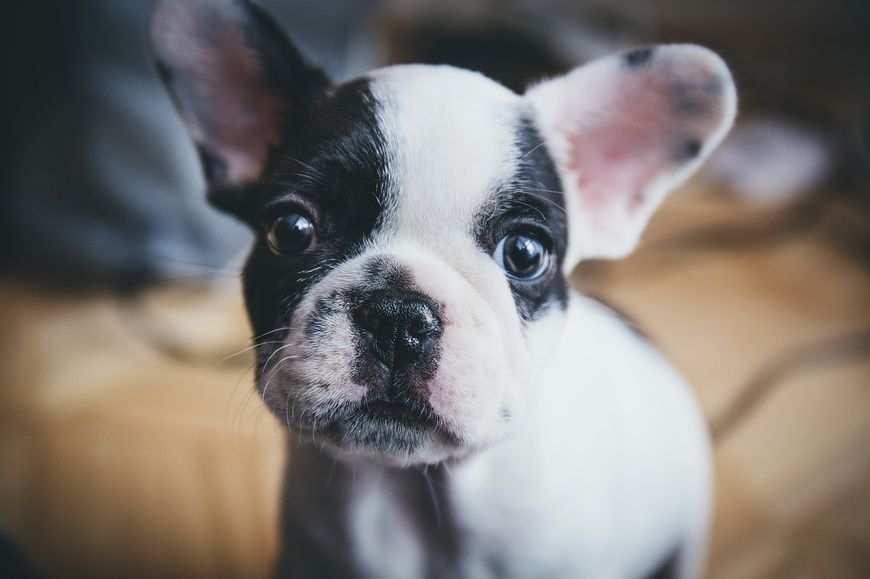 Pomoc dla chorego psa