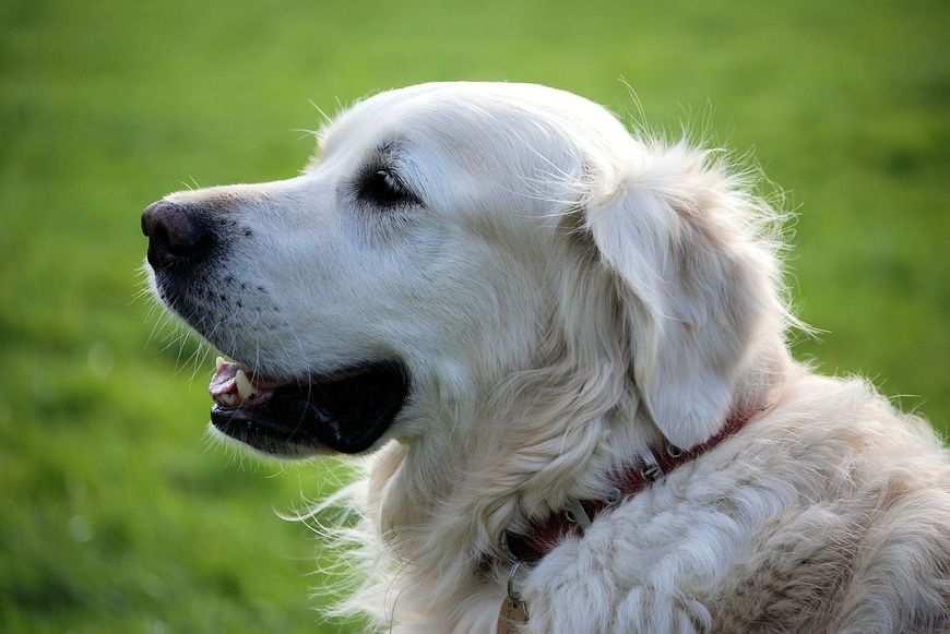 Rany u psa, jak leczyć