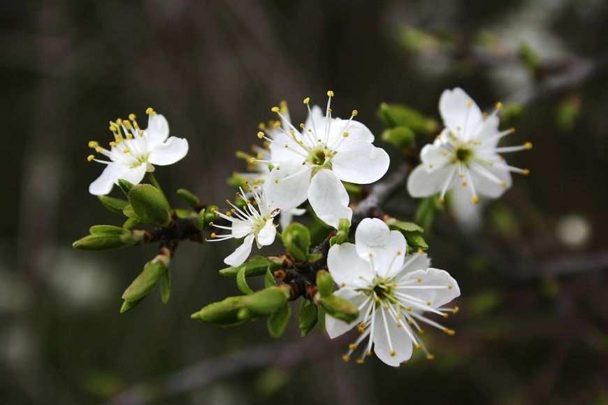 Bulwy i cebule kwiatów