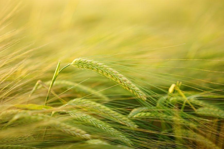 Sprawdzone i bezpieczne środki ochrony roślin