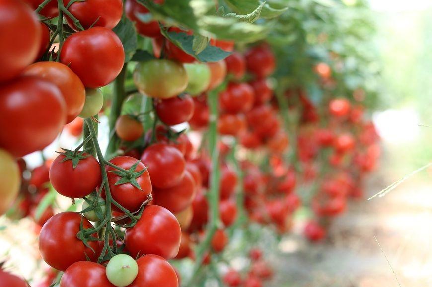 Popularne środki ochrony roślin